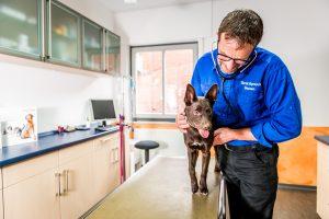 Tierarztpraxis Gossen Leistungen